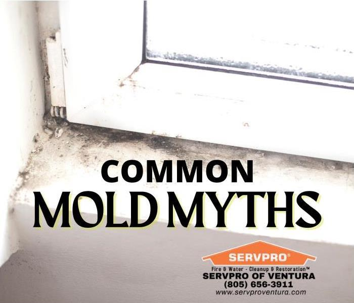 Common Mold Myths