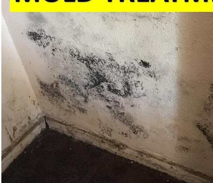 Mold Remediation Nine Ways to Prevent Mold Growth